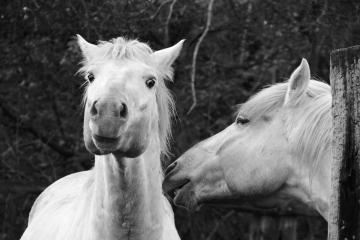 006-katia-bonaventura-photojournalism-cavalli-cona