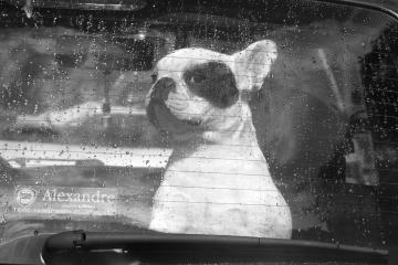 013-katia-bonaventura-photojournalism-ritratto-bulldog