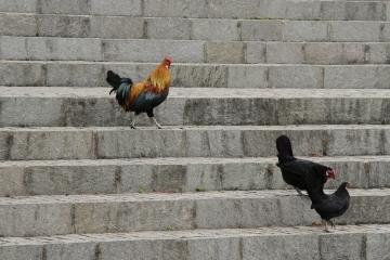 039-katia-bonaventura-photojournalism-gallo