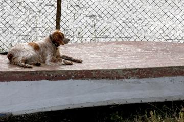 040-katia-bonaventura-photojournalism-cane-barca-grado