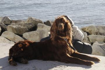 046-katia-bonaventura-photojournalism-cane-caccia-grado