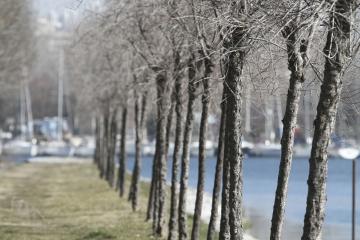 005-katia-bonaventura-photojournalism-paesaggio-alberi-canale-brancolo