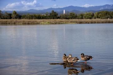 006-katia-bonaventura-photojournalism-paesaggio-anatre