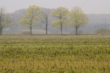 018-katia-bonaventura-photojournalism-paesaggio-nebbia-alberi