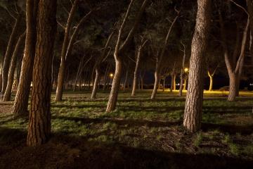 022-katia-bonaventura-photojournalism-paesaggio-notturna-alberi