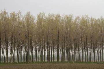 031-katia-bonaventura-photojournalism-alberi-brancolo