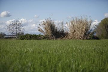 034-katia-bonaventura-photojournalism-paesaggio-campo